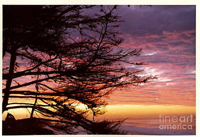 Photograph - Sunrise In Isla Vista by Johanne Peale