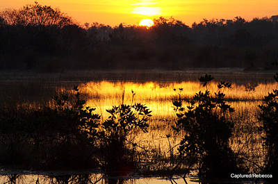 Sunrise In The Everglades Art Print