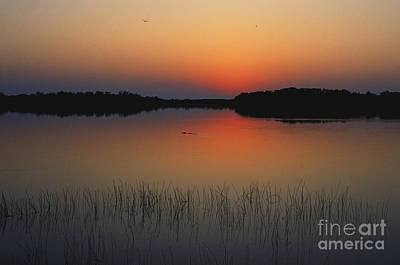 Photograph - Sunrise In The Everglades by Claudine Laabs and Photo Researchers