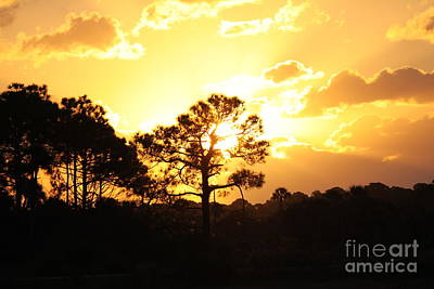 Photograph - Sunrise by Jeanne Andrews