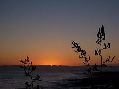 Art Print featuring the photograph Sunrise On East Coast Of North Island 2 by Peter Mooyman