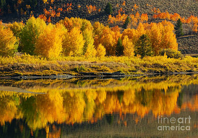 Photograph - Sunrise Reflection Grand Teton National Park by Sandra Bronstein