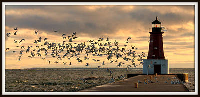 Photograph - Sunrise Seagulls 219 by Mark J Seefeldt