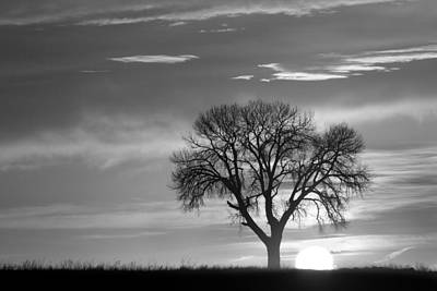Sunrise Silhouette Black And White Art Print by James BO  Insogna