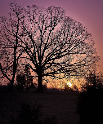 Photograph - Sunrise Silhouette by Lori Coleman