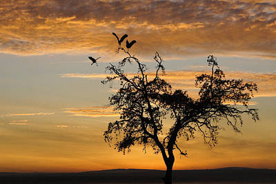 Photograph - Sunrise Silhouette by Michele Burgess