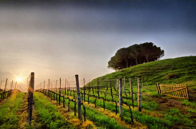 Sunrise Through The Vineyards Art Print by Matteo Zonta