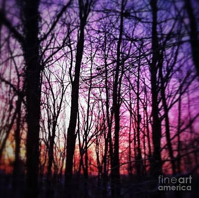 Iphone4 Digital Art - Sunrise Through The Woods by Michelle Hawk