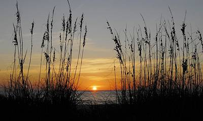 Photograph - Sunset - Seaoats by Kirk Stanley