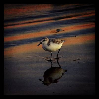 Sunset And Bird Reflection Art Print