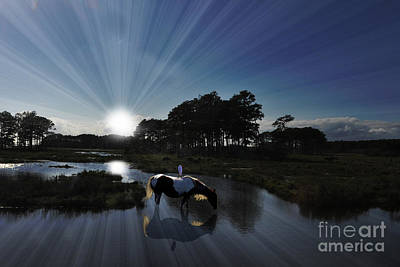 Art Print featuring the photograph Sunset Assateague Island With Wild Horse by Dan Friend