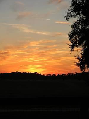 Sunset At The Florida Horse Park Original