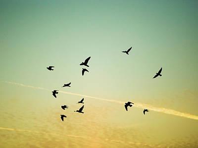 Of Birds Photograph - Sunset Birds by Sarah Palmer