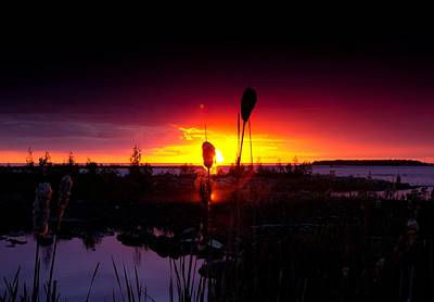 Cat Tails Photograph - Sunset Cat Tail by Cale Best