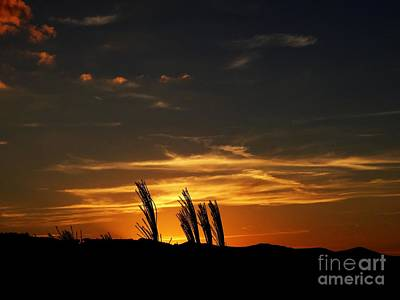 Photograph - Sunset by Crystal Joy Photography