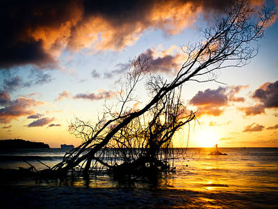 Sunset Drift Wood 2 Art Print
