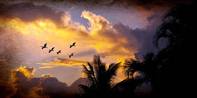 Photograph - Sunset Flight by Don Durfee