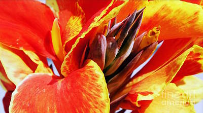 Photograph - Sunset Floral by J Kinion