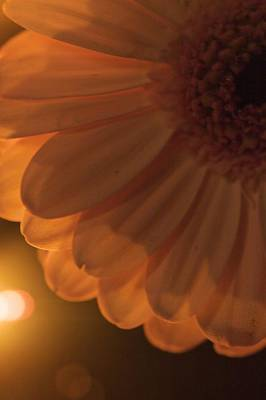 Print featuring the photograph Sunset Flower by JM Photography