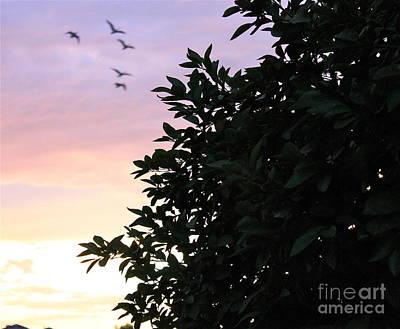 Photograph - Sunset Fly By by Pamela Walrath