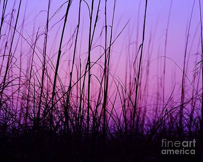 Sunset Grasses Art Print by Al Powell Photography USA