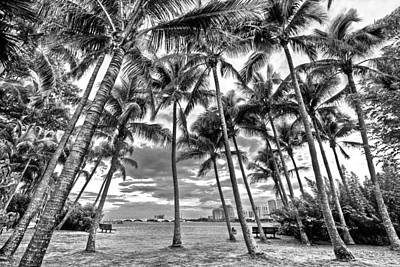 Photograph - Sunset Grove At Palm Beach by Debra and Dave Vanderlaan