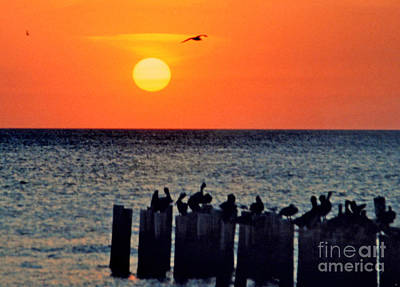 Art Print featuring the photograph Sunset In Florida by Lydia Holly