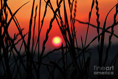 Cieszyn Photograph - Sunset In Nature by Mariola Bitner