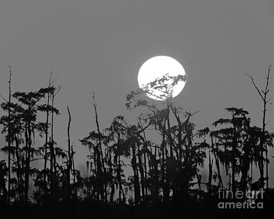 Art Print featuring the photograph Sunset In Swamp by Luana K Perez