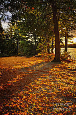 Pine Needles Photograph - Sunset In Woods At Lake Shore by Elena Elisseeva