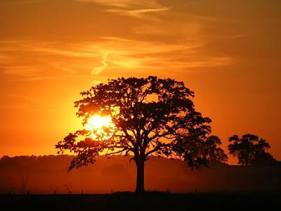 Photograph - Sunset by Janna Johnson