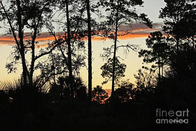 Photograph - Sunset Lace by Terri Mills