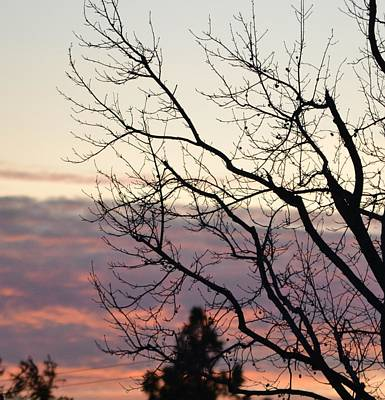 Sunset Of Winter's Beauty Art Print by Naomi Berhane