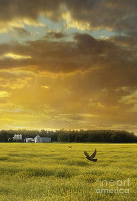 Photograph - Sunset On The Prairies With Fields Of Rapeseed by Sandra Cunningham