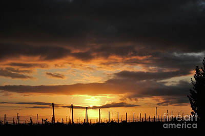 Sunset On The Vineyards Art Print