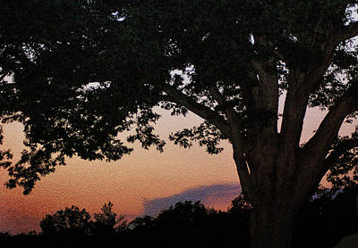 Sunset Over A Witness Tree Art Print by Dave Sandt