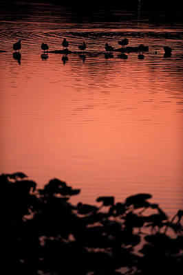 Photograph - Sunset Over Carnegie Lake by Frank DiGiovanni