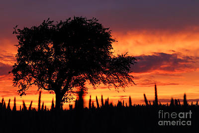 Sunset Over The Meadows Art Print by Clare Scott