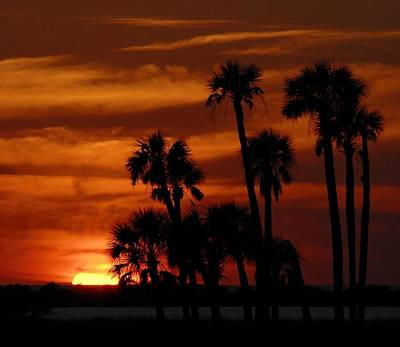 Photograph - Sunset Palms by Kirk Stanley