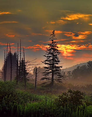 Sunset Pine Art Print