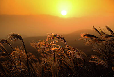 Sunset, Reeds And Wind Art Print