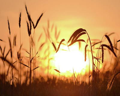 Photograph - Sunset Rye IIi by JD Grimes