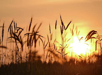 Photograph - Sunset Rye by JD Grimes