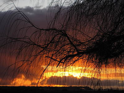 Photograph - Sunset by Sandra  Rohmann