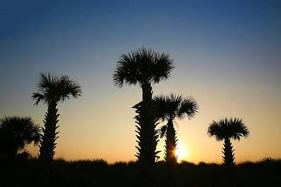 Photograph - Sunset Sentinels by Shari Jardina