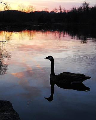 Sunset Serenity Art Print by Shelley Patten-Forster