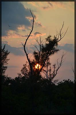 Photograph - Sunset Shadows by Amanda Vouglas