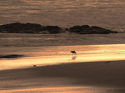 Sunset Shimmer Beach Print by Debra     Vatalaro