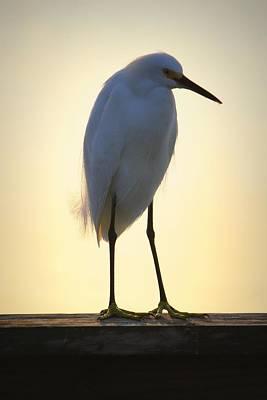Photograph - Sunset Shore Bird by Mandy Shupp
