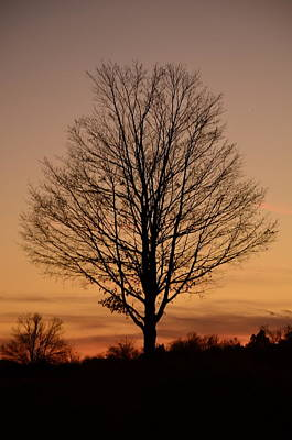 Photograph - Sunset Silhouette by Cathy Shiflett
